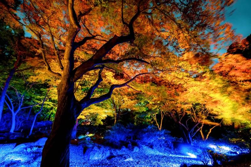 Korakuen in fall at night and illuminated