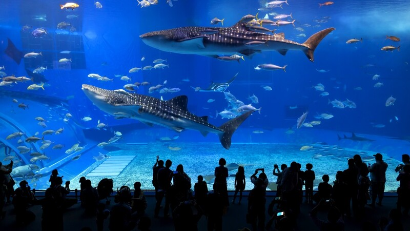 Okinawa Aquarium