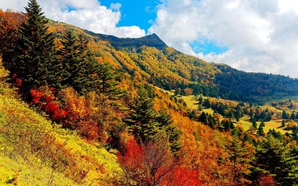 Shiga Kogen In Autumn